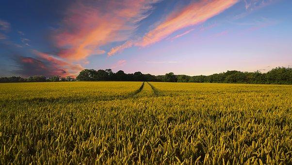Comment investir dans l'agriculture?
